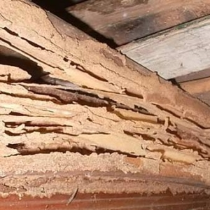 termite inspection rockaway nj