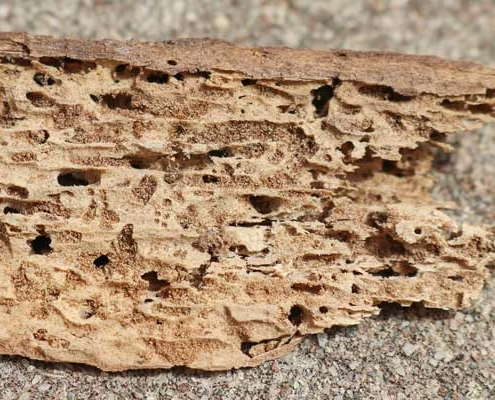 Piced of wood showing termites and damage